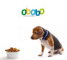 Hondenvoer abonnement